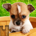 Dogs Jigsaw Puzzles Game – For Kids & Adults 🐶  (Mod)  26.3