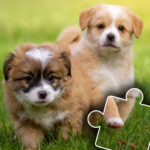 Dogs & Cats Puzzles for kids & toddlers 2 🐱🐩 (Mod)