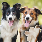 Dogs & Cats Puzzles for kids & toddlers 🐱🐩 🐾 (Mod)